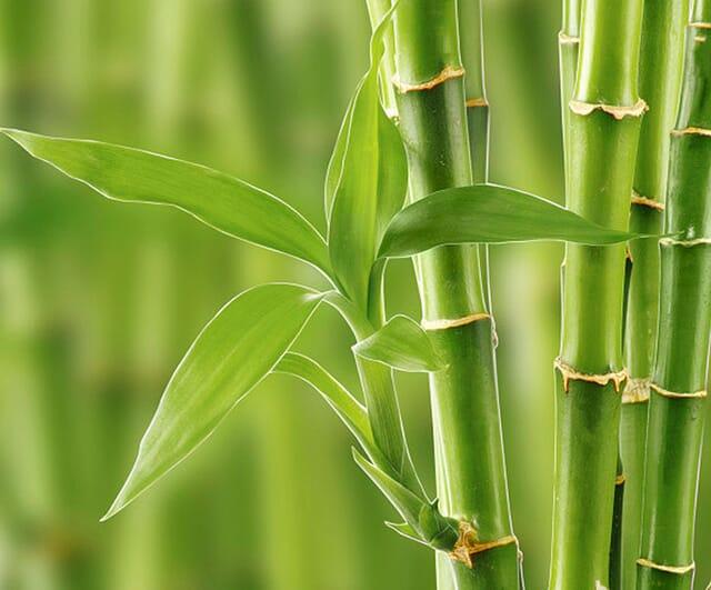 Bettdecken mit Füllung aus Bambus und Bio-Baumwolle.