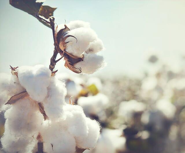 Bettdecken mit Füllung aus Bio-Baumwolle.